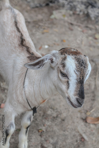 Photo Abstruse Goat