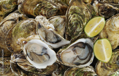Raw oysters background
