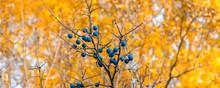 Autumn Panoramic Natural Backg...