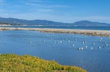 USA, California, Santa Barbara Beach, Gulls On The Lagoon