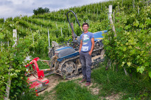 Driver On The Tracked Tractor Works Among The Rows Of Vineyards In The Langhe And Roero Hills In Piedmont The Sky Is Cloudy And Close To A Thunderstorm