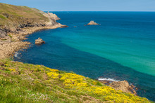 France, Brittany, Cap Sizun, Yellow Gorse Bushes In Bloom Between The Baie Des Trepasses And The Pointe Du Raz