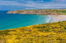 France, Brittany, Cap Sizun, Flowers Of Ulex, Pointe Du Van And Baie Des Trepasses
