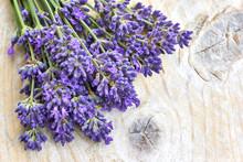 Lavender Flowers In Deep Purpl...