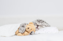 Tabby Kitten Sleeping With Toy...