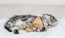 Baby Kitten Sleeping With Toy ...