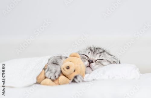 Tabby kitten sleeping with toy bear on pillow under blanket Fototapete