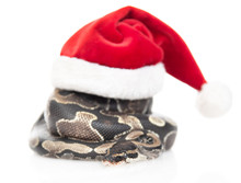 Snake With Red Christmas Hat. ...