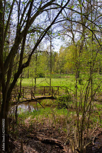 Small wooden bridge over the old Rhine to a grassland Wall mural
