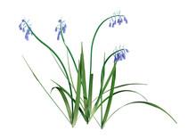 3D Rendering Bluebell Flowers ...