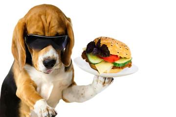 fast food, funny hand holdi...