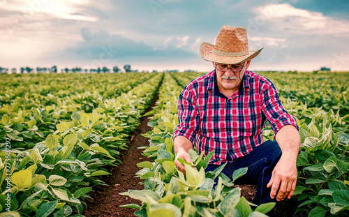Foto Farmer in a soybean field. Agricultural concept