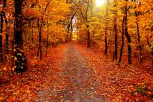 Autumn Landscape Forest. Yello...