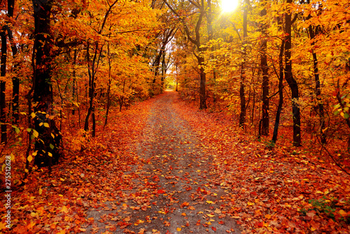 Fotobehang Herfst Autumn landscape forest. Yellow trees and road with sun
