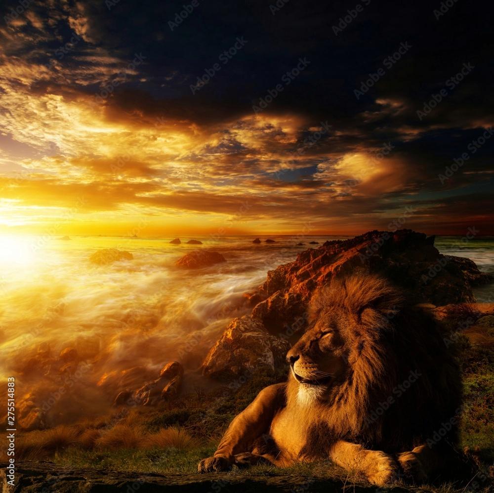Fototapeta The lion king at sunset 4k