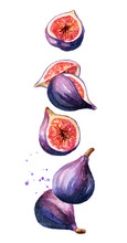 Flying Fig Fruit Wit Slices And Leaves. Watercolor Hand Drawn Illustration  Isolated On White Background