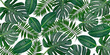 Leinwandbild Motiv Horizontal artwork composition of trendy tropical green leaves - monstera, palm and ficus elastica isolated on white background (mixed).