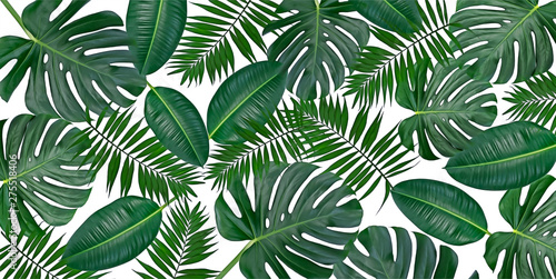 Foto  Horizontal artwork composition of trendy tropical green leaves - monstera, palm and ficus elastica isolated on white background (mixed)