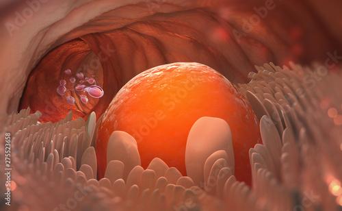 Obraz na plátně Egg cell leaves the ovary