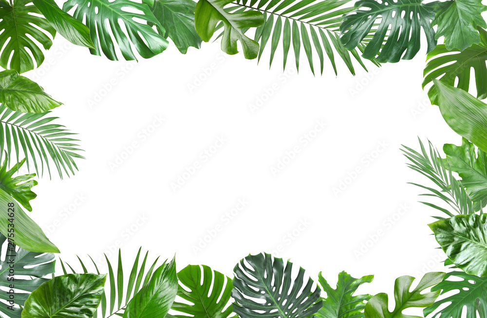 Fototapety, obrazy: Frame made of fresh green tropical leaves on white background. Space for design