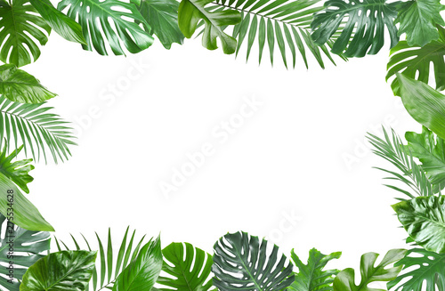 Foto  Frame made of fresh green tropical leaves on white background