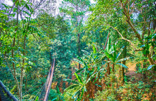 The Forest In Gorge Of Tree Top Walk, Mae Fah Luang Garden, Doi Tung, Chiang Rai, Thailand