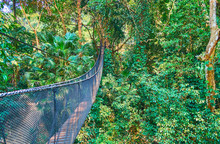 The Long Hanging Bridge, Tree Top Walk, Mae Fah Luang Garden, Doi Tung, Chiang Rai, Thailand