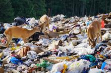 Deer Trash