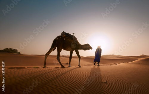Photo sur Aluminium Chameau camel in the desert