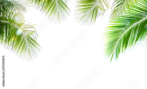 Foto auf AluDibond Palms Coconut palm leaf isolated on white background