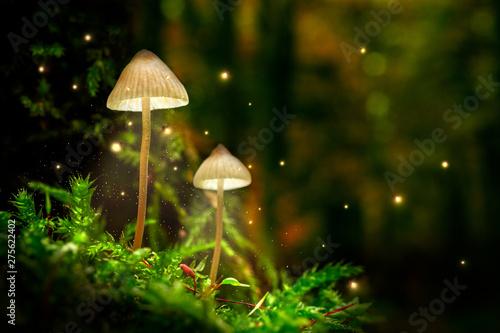 Oszałamiająco grzyby na mchu i świetliki w lesie o zmierzchu