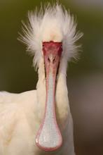 Bird With Long Bill