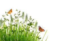 Wild Green Grass And Butterflies