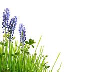 Wild Green Grass And Blue Musc...