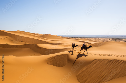 Caravan of one person and two camels in summer sahara getting to destination, na Canvas Print
