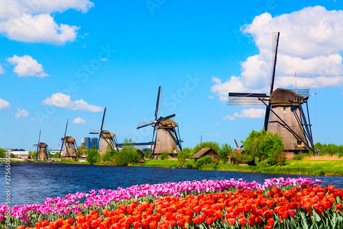 Obraz Colorful spring landscape in Netherlands, Europe. Famous windmills in Kinderdijk village with a tulips flowers flowerbed in Holland. Famous tourist attraction in Holland - fototapety do salonu