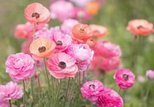 Original Photograph Of Pink An...
