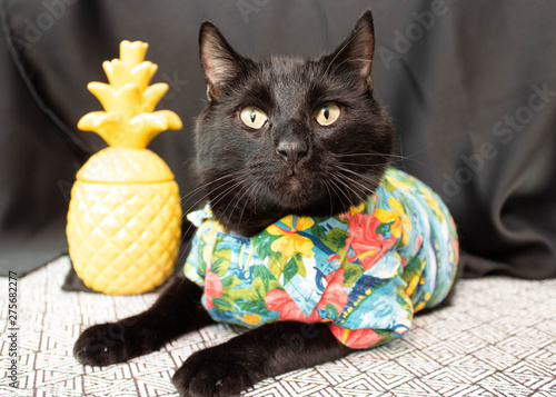 Luau Cat is Ready to Party