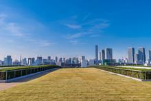 豊洲市場の屋上緑化広場