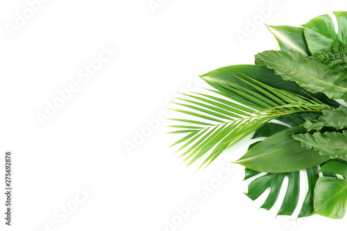 Poster Palmier Fresh green palm leaves isolated on white background, summer plants object