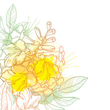 Corner Bouquet Of Outline Tecoma Stans Or Yellow Trumpet Flower Bunch, Bud And Leaf In Pastel Yellow Isolated On White Background.