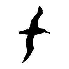 Albatross Silhouette Fly Vecto...