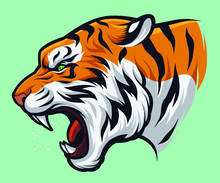 Angry Roaring Tiger, Panthera Tigris