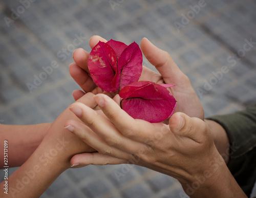 Photo Niña dandole flores a su madre