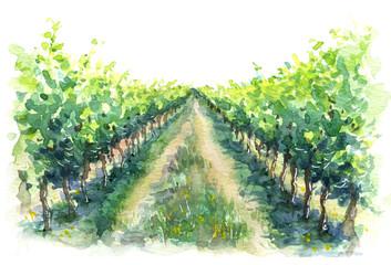 Ulomak seoske scene vinogradarske akvarelne skice