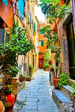 Colorful Plant Lined Old Street In The Cinque Terre Village Of Vernazza, Italy