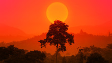 Beautiful African Sunset With A Big Tree. Silhouette Of Big Tree Over Big Setting Sun. Forest Sun Set. Epic Nature Background. Ecology Concept.