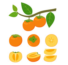 Vector Illustration Of Fresh Persimmon Fruit Vector Set Isolated On White Background