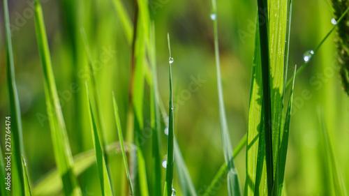 Green Grass #275764474