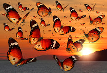 Butterflies Flying Over The Sea Towards Sunset